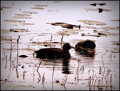 2015-01-09_P1092897_Lake Chautauqua Park,Clearwater,Fl