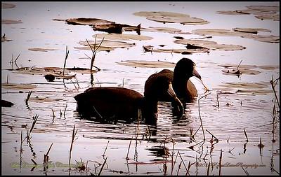 2015-01-09_P1092906_Lake Chautauqua Park,Clearwater,Fl