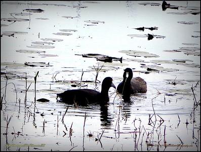 2015-01-09_P1092895_Lake Chautauqua Park,Clearwater,Fl