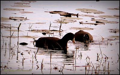 2015-01-09_P1092904_Lake Chautauqua Park,Clearwater,Fl