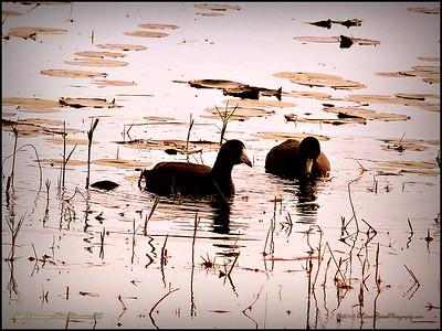 2015-01-09_P1092898_Lake Chautauqua Park,Clearwater,Fl
