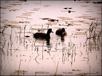 2015-01-09_P1092899_Lake Chautauqua Park,Clearwater,Fl