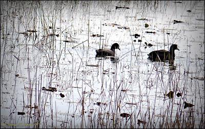 2015-01-09_P1092888_Lake Chautauqua Park,Clearwater,Fl