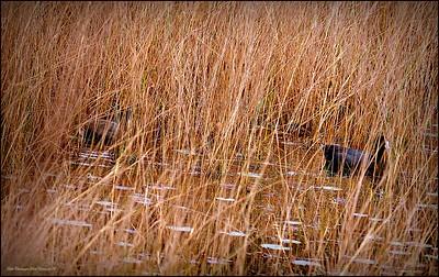 2015-01-09_P1093011_Lake Chautauqua Park,Clearwater,Fl