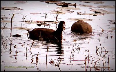 2015-01-09_P1092902_Lake Chautauqua Park,Clearwater,Fl
