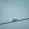 Kestrel,aircraft,StarlingBear,squirrel  (ambl,-)   2018-02-09-2090092