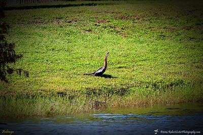2014-10-15_IMG_6651_ Pinellas Park,Fl