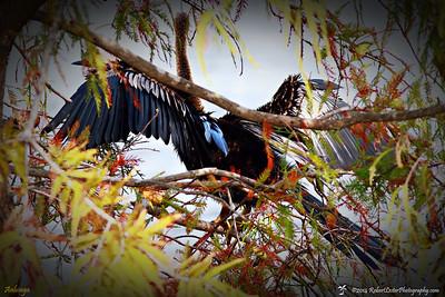 2014-10-15_IMG_6466_ Pinellas Park,Fl