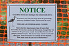 The new heronry at Marymoor Park