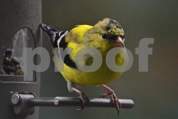 Backyard Birds 2014