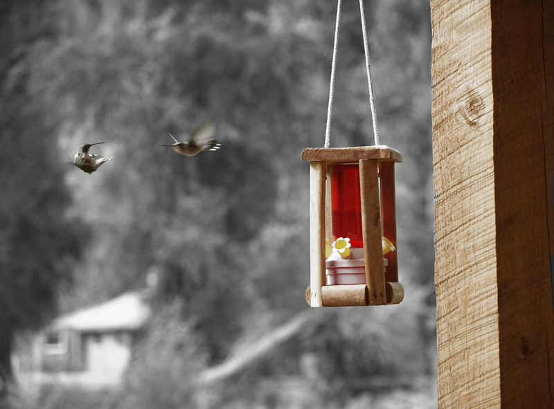 Dueling Hummingbirds - Dolores, Colorado