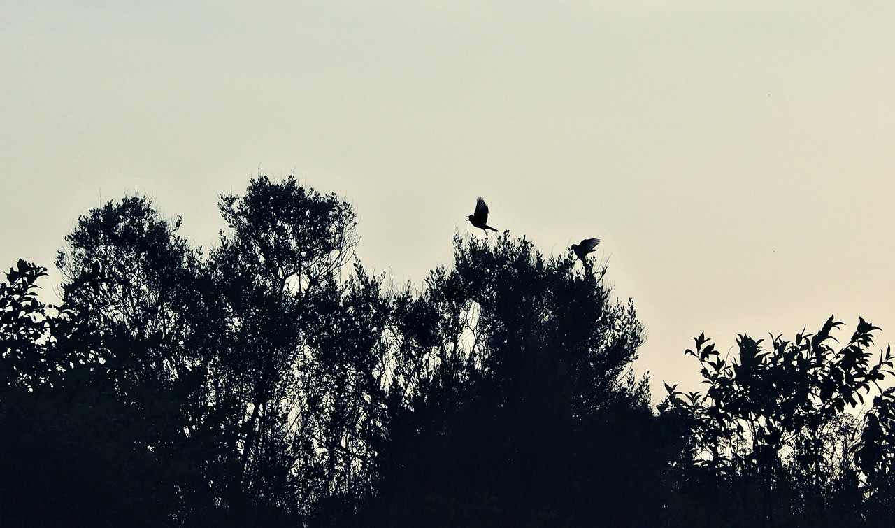 Bird Silhouettes - Lake Fork, Texas