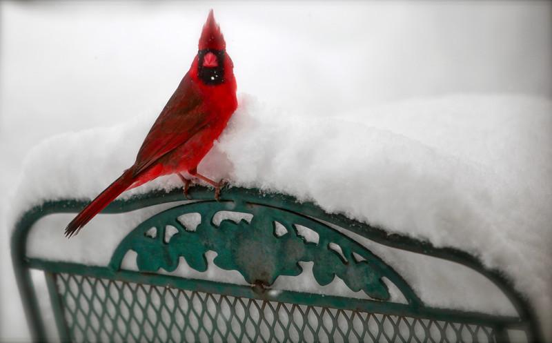 Birds at Backyard feeder in Fairfax, VA during big snowstorm.