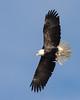 0822-Eagles-DSC_8636