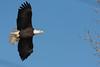 1123-Eagles-DSC_8948
