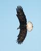 0476-Eagles-DSC_8290