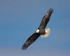 0787-Eagles-DSC_8601