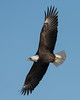 1054-Eagles-DSC_8879