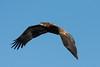 1415-Eagles-DSC_9244