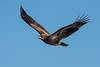 1414-Eagles-DSC_9243