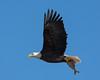 1452-Eagles-DSC_9288