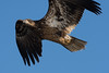 1416-Eagles-DSC_9245
