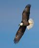 0789-Eagles-DSC_8603