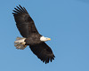 1120-Eagles-DSC_8945