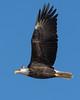 1427-Eagles-DSC_9260