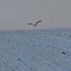 White_Birds_0001