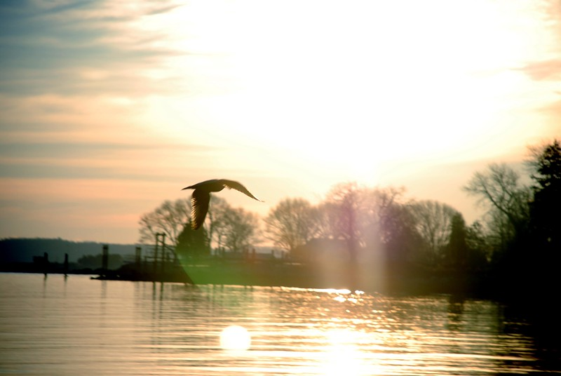 This picture of a seagull at sunrise was taken at the North Kingstown Town Beach.  I though way the light hits the wings of the bird is absolutly incredible.