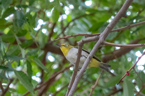 Birds Needing ID