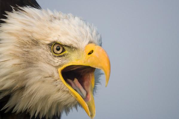 Birds Roofvogel fotografiemiddag Berkel en Rodenrijs