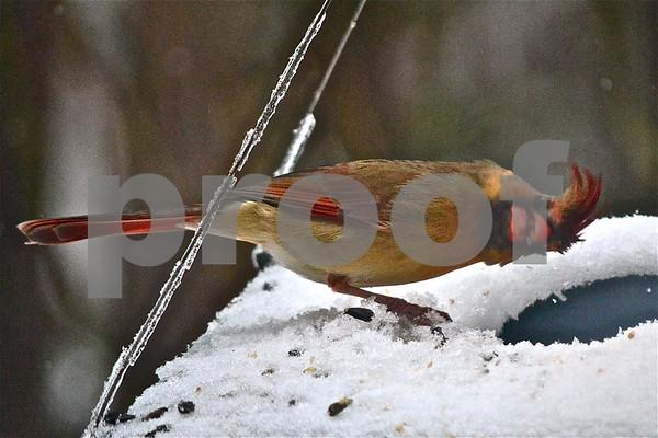 Birds in February Snow