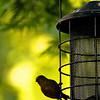 A cute little bird in my garden