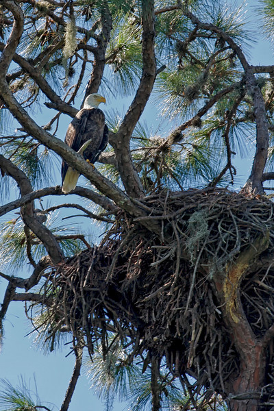 Nature Photography Jerry Dalrymple shares images of his Birds of Prey