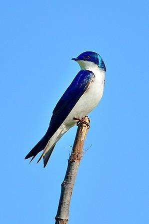 Plainsboro Preserve Birds