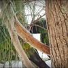 Nanday Parakeet_P4240024_Gulfport,Fl