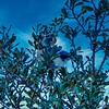 Blue Jay 2021-01-31 RX10M4