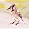 P7110012_ Blue Jay2
