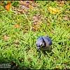 P5270075_ blue jay