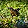 015_taylor park_2021-06-01