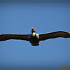 Bald Eagles shoot, 2013-12-22,Palm Harbor,Fl _IMG_2581_