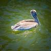 2019-08-22_2019-08-22 1500hrs Ft DeSoto Conty Park,Tierra Verde, FL__8220136