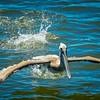 2019-08-22_2019-08-22 1500hrs Ft DeSoto Conty Park,Tierra Verde, FL__8220129