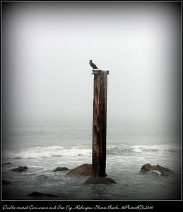 Double-crested Cormorant and Sea Fog...Redington Shores Beach...©PhotosRUs2008