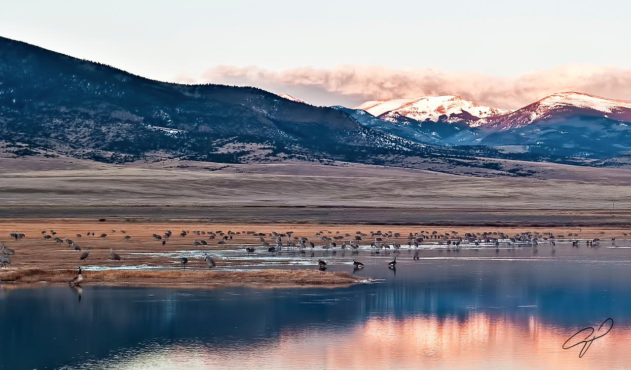 Small group of Sand Hill Cranes  just before sunrise.  Most of them had spent the night balanced on one foot in the shallow water.   note the ice that formed around their legs.  they are beautiful birds but not graceful when extracting themselves from the ice.