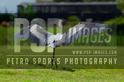 051113_WSHS_Athletic_golf_Tournament_- 1313