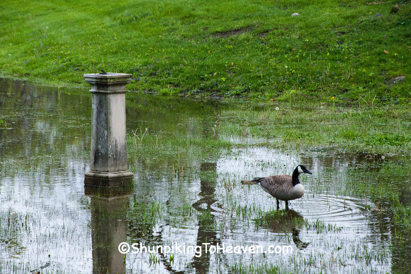 Canada Goose and Sundial, Allen County, Indiana