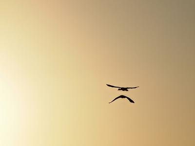 Ducks heading towards the sun